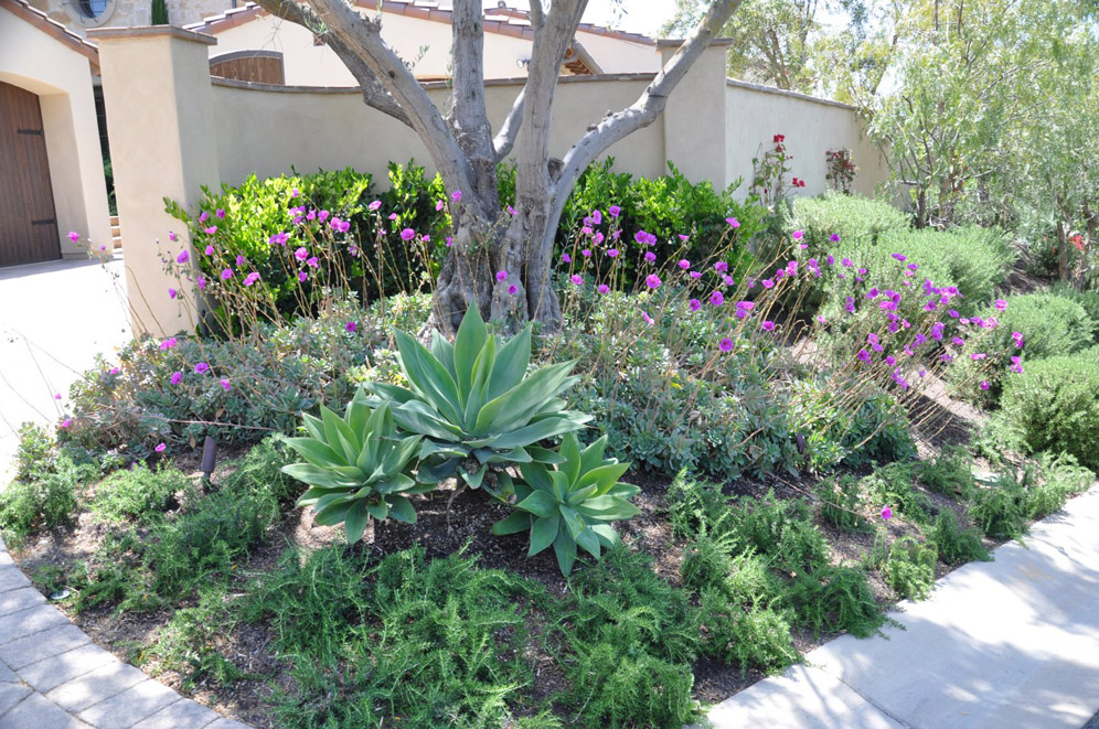 Shade and succulents for Succulents that do well in shade